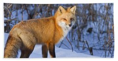 Christmas Fox Hand Towel by Mircea Costina Photography