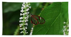 Clearwing Butterfly Hand Towel by Ronda Ryan