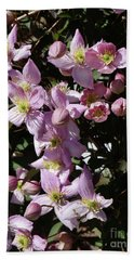 Clematis Montana  In Full Bloom Hand Towel