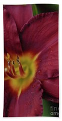 Close Up Day Lily Hand Towel