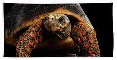 Close-up Of Red-footed Tortoises, Chelonoidis Carbonaria, Isolated Black Background Bath Towel