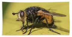 Close Up - Tachinid Fly - Nowickia Ferox Hand Towel