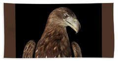 Close-up White-tailed Eagle, Birds Of Prey Isolated On Black Bac Bath Towel