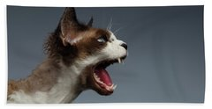 Closeup Devon Rex Hisses In Profile View On Gray  Hand Towel