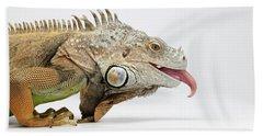 Closeup Green Iguana Showing Tongue On White Hand Towel