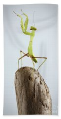Closeup Green Praying Mantis On Stick Bath Towel