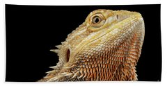 Closeup Head Of Bearded Dragon Llizard, Agama, Isolated Black Background Bath Towel