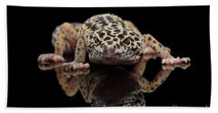 Closeup Leopard Gecko Eublepharis Macularius Isolated On Black Background, Front View Bath Towel