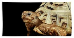 Closeup Leopard Tortoise Albino,stigmochelys Pardalis Turtle With White Shell On Isolated Black Back Hand Towel by Sergey Taran