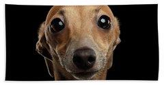 Closeup Portrait Italian Greyhound Dog Looking In Camera Isolated Black Bath Towel by Sergey Taran