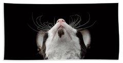 Closeup Portrait Of Cornish Rex Looking Up Isolated On Black  Bath Towel