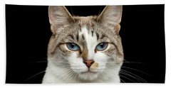 Closeup Portrait Of Face White Cat, Blue Eyes Isolated Black Background Bath Towel