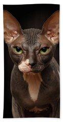 Closeup Portrait Of Grumpy Sphynx Cat Front View On Black  Bath Towel