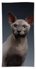 Closeup Portrait Of Sphynx Cat Looking In Camera On Dark  Hand Towel