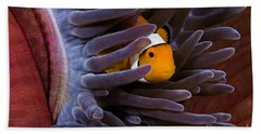 Clownfish And Anemone Hand Towel