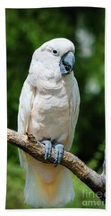 Cockatoo Hand Towel