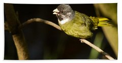 Collared Finch-bill Hand Towel