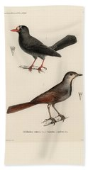 Bath Towel featuring the drawing Collared Palm Thrush And Chestnut-fronted Helmetshrike by J D L Franz Wagner