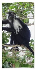 Colobus Monkey Eating Leaves In A Tree Hand Towel