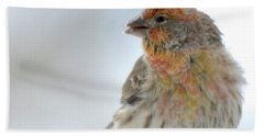 Colorful Finch Eating Breakfast Hand Towel