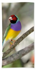 Colorful Gouldian Finch Hand Towel