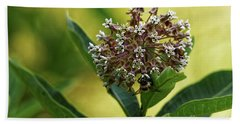 Common Milkweed Bath Towel by Paul Mashburn