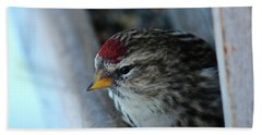 Common Redpoll Bath Towel