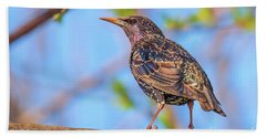 Common Starling - Sturnus Vulgaris Hand Towel by Jivko Nakev