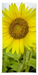 Bath Towel featuring the photograph Common Sunflower by Chris Coffee