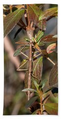 Hand Towel featuring the photograph Common Walkingstick Or Northern Walkingstick Din0263 by Gerry Gantt