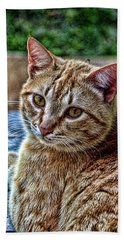 Bath Towel featuring the photograph Content Yellow Tabby Cat Hdr by Lesa Fine