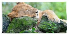 Contented Sleeping Lion Bath Towel by Richard Bryce and Family