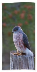 Coopers Hawk Perched Hand Towel