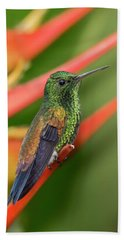 Bath Towel featuring the photograph Copper Rumped Hummingbird by Rachel Lee Young