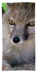 Hand Towel featuring the photograph Corsac Fox- Vulpes Corsac 03 by Ausra Huntington nee Paulauskaite