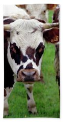 Cow Closeup Hand Towel