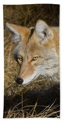 Coyote In The Wild Bath Towel