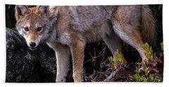 Coyote Portrait Hand Towel