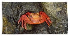 Crab Bath Towel by Will Burlingham