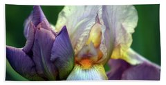 Cream And Purple Bearded Iris With Bud 0065 H_2 Bath Towel