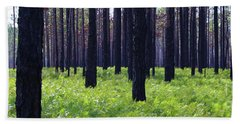 Springtime In The Croatan National Forest Hand Towel