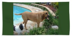 Cujo And Lucky By The Pool Hand Towel by Val Oconnor
