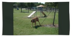 Cujo Running At The Park Hand Towel by Val Oconnor