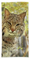 Hand Towel featuring the photograph Curiosity The Bobcat by Jessica Brawley