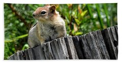 Curious Chipmunk Hand Towel by AJ Schibig