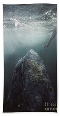 Curious Gray Whale And Tourist Hand Towel