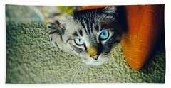 Bath Towel featuring the photograph Curious Kitty by Silvia Ganora