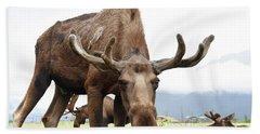 Curious Moose Bath Towel by Dacia Doroff