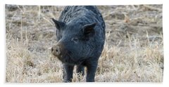 Bath Towel featuring the photograph Cute Black Pig by James BO Insogna