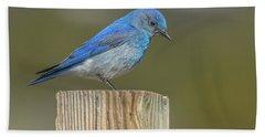Daddy Bluebird Guarding Nest Hand Towel